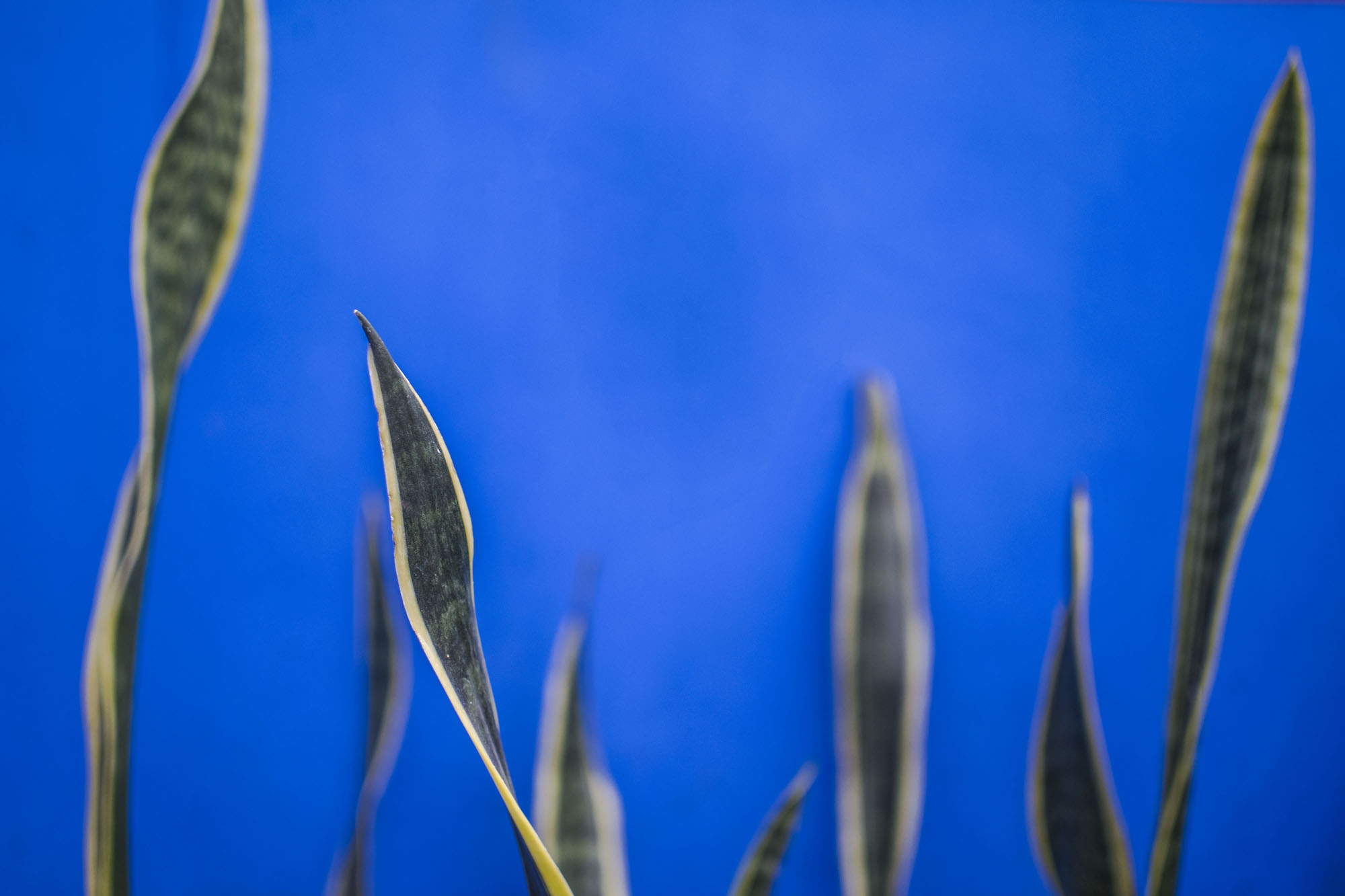 Bleu | Mexico Ciudad | Frida Kahlo Wall and Plants | LovaLinda Photography.jpg