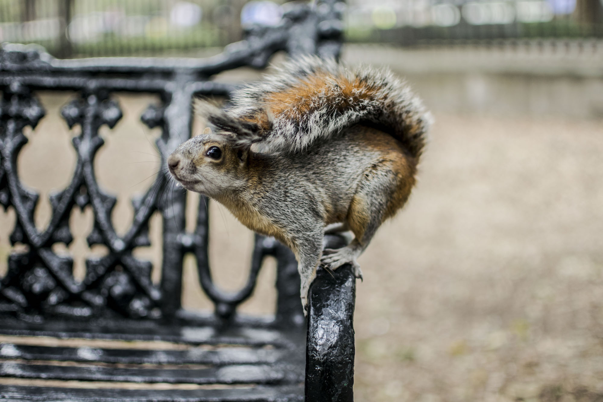 Mexico Ciudad | Chapultepek Squirrel | LovaLinda Photography