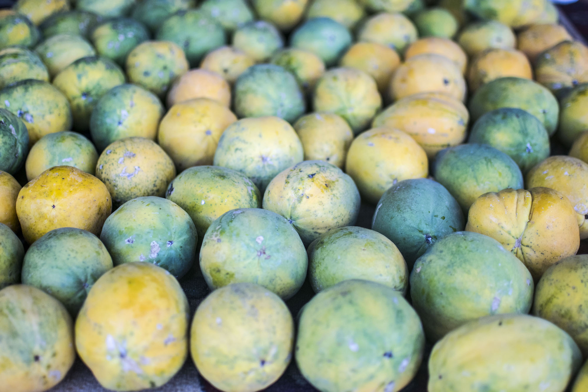 Oahu | North Shore Papaya | LovaLinda Photography.jpg